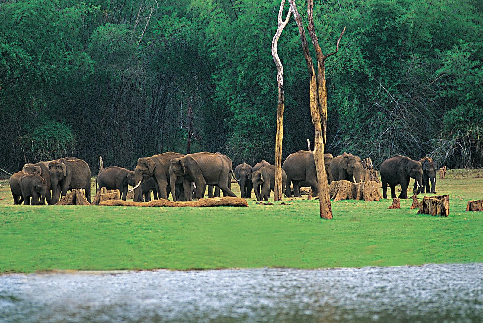 Wildlife in Devikulam