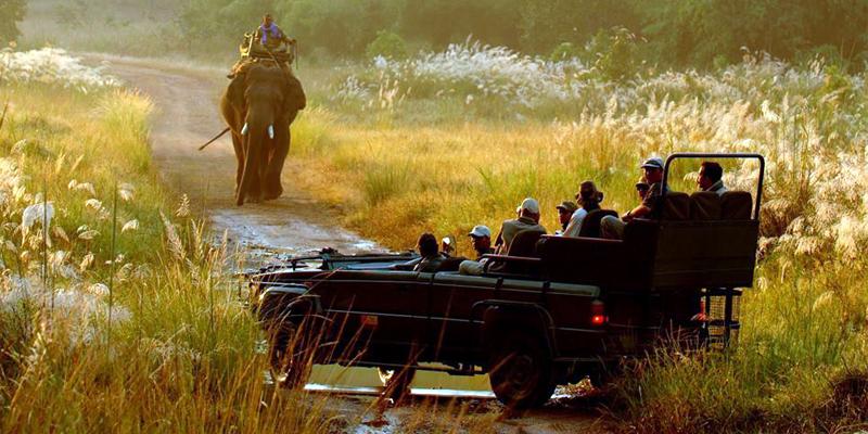 Northeast India Wildlife Sanctuaries