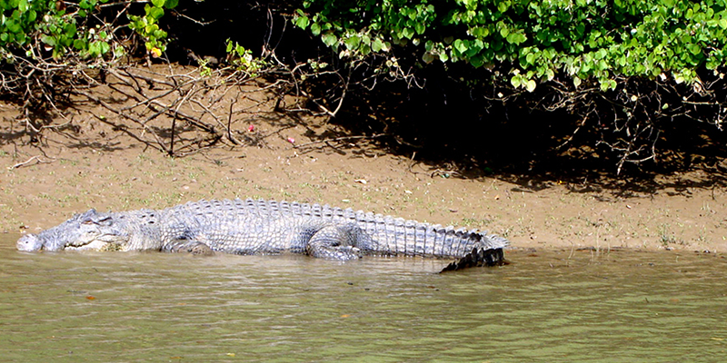 Wildlife destinations of Odisha