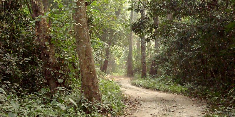Garh Forests