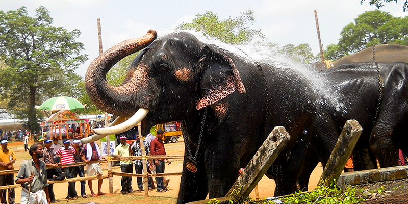 Monsoon spa for elephants
