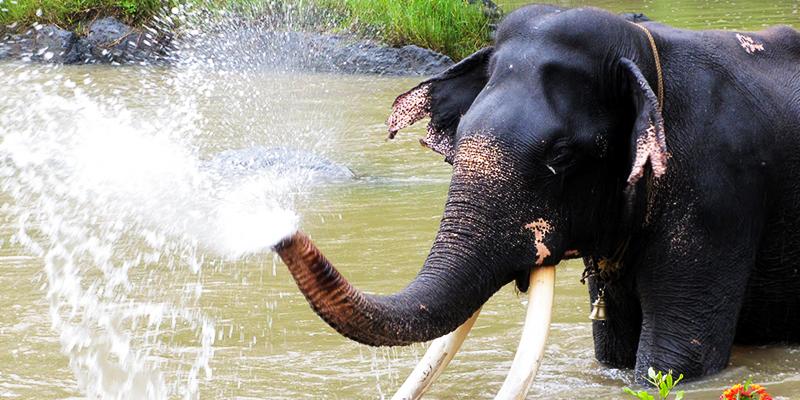 Monoosn Spa for elephants