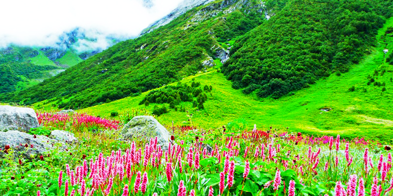 Valley of Flowers - Uttarakhand