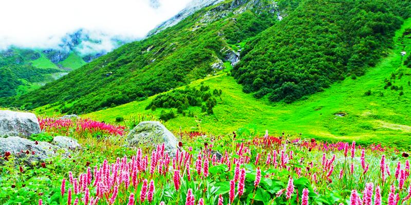 Valley of Flowers - Uttarakhand