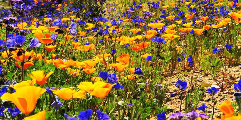 Discover an abundance of bio-diversity