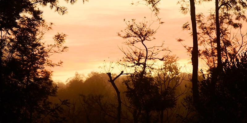 Wayanad Wildlife Sanctuaries