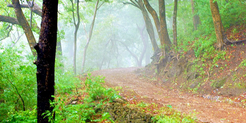 Dhonk Forest