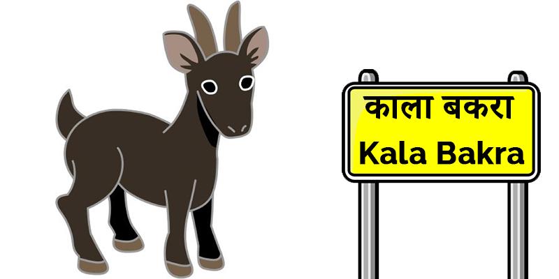 Kala Bakra