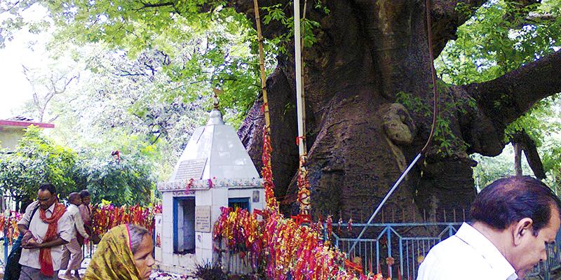 love story of parijaat tree