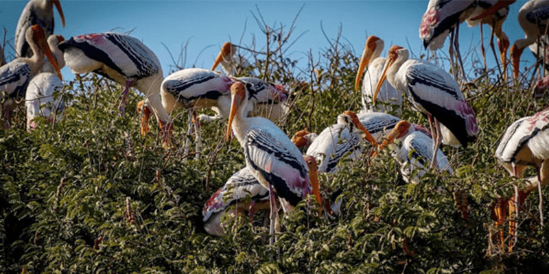 Karnataka's foreign Bird Village