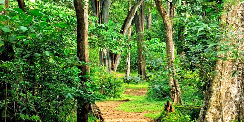 Shola Forests