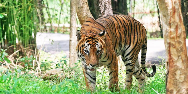 Dampa Tiger Reserve1