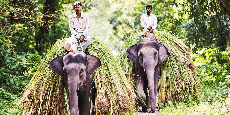 Dooars, Bengal