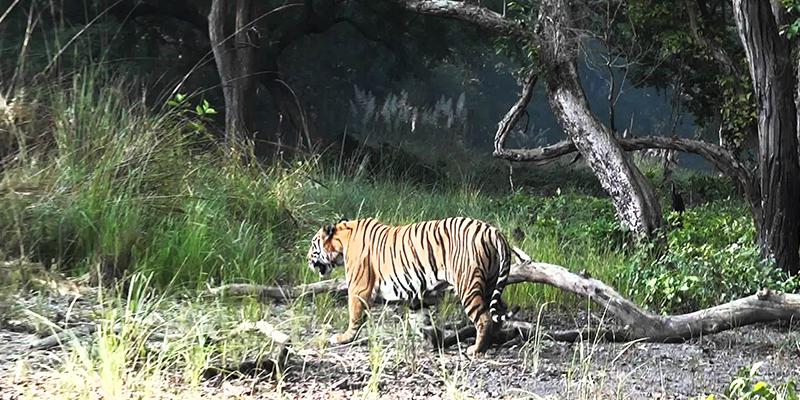 Dudhwa National Park1