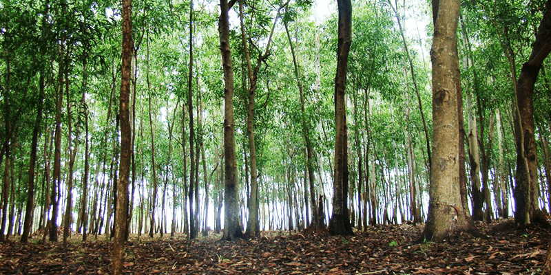 McCluskieganj Forests