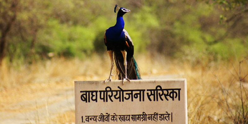 Sariska Wildlife Reserve