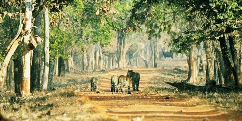 Tadoba Tiger Reserve1