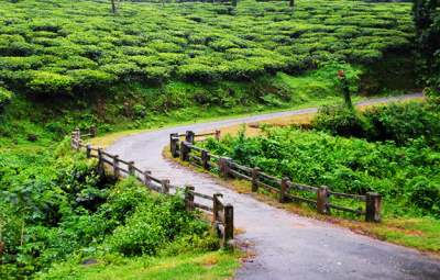 Top Monsoon attractions of North Bengal