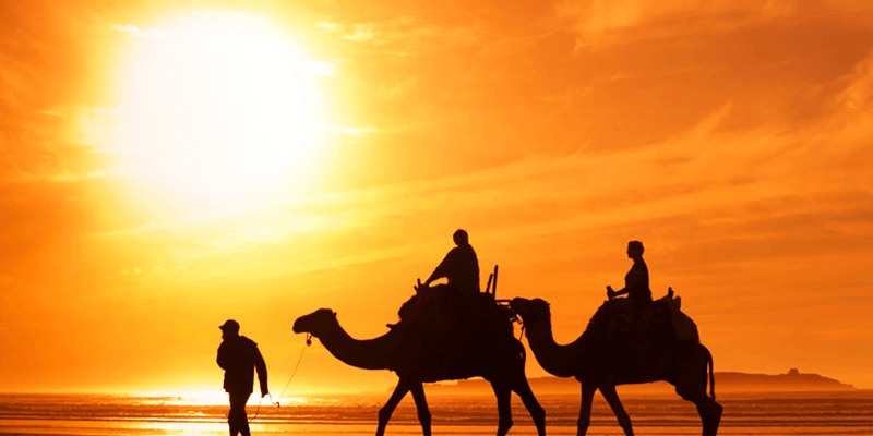 Camel Safari Pushkar
