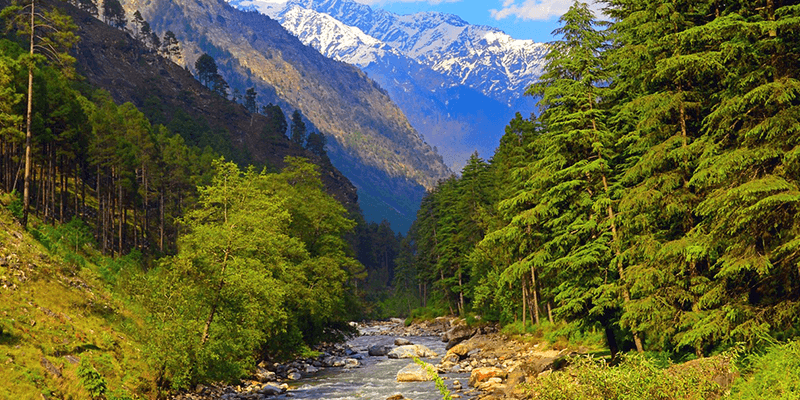 Malana Forest