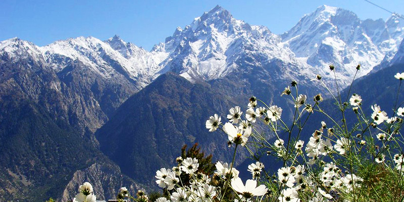 Kinnaur A Trip through tourism marvels of Chilgoza Country!