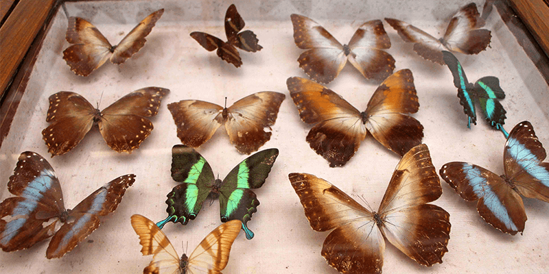 Butterfly Museum images