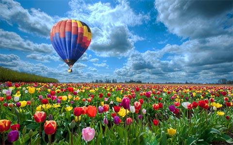 Tulip Gardens in Kashmir
