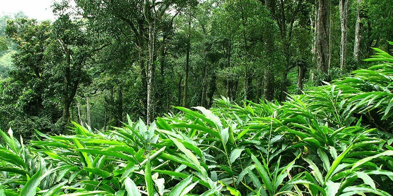 Gavi forests