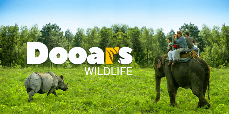 Dooars forest