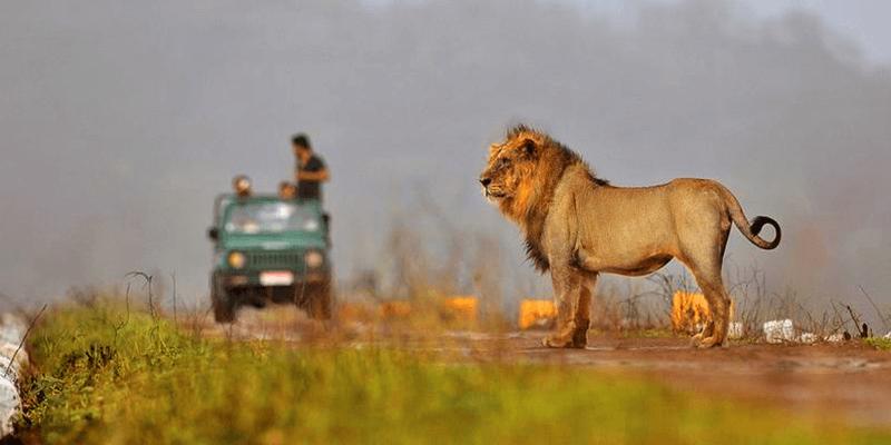 Gir ln safari