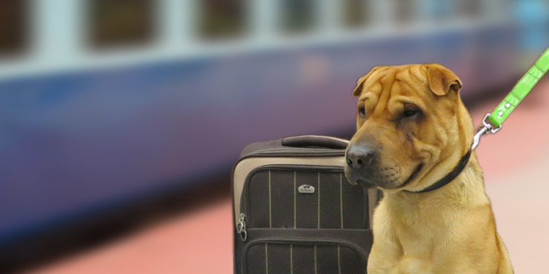Tips to Travel in Train with Your Pet Dog - RailYatri Blog