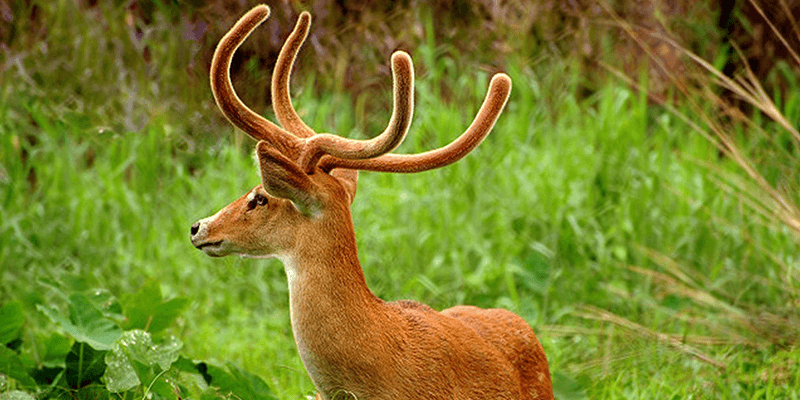 Keibul Lamjao