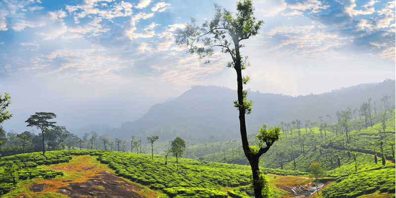 Nelliyampathy Hills