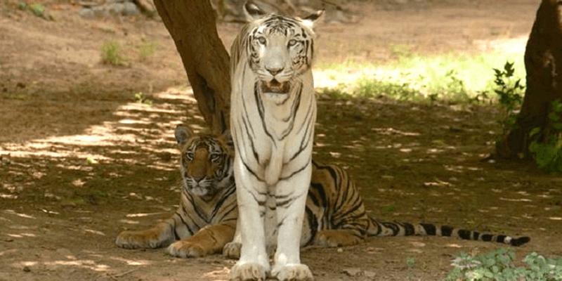 Gandhi Zoo