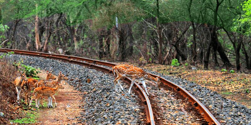 Siliguri to Alipurduar train