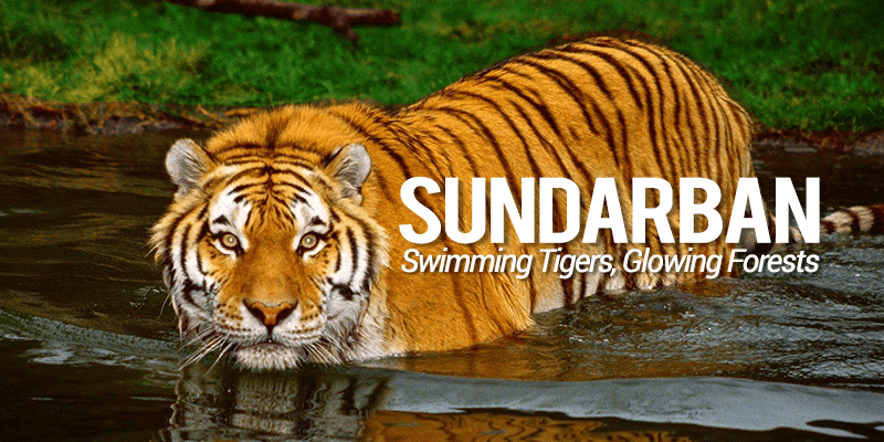 All need to know for a perfect Sundarban tour! - RailYatri Blog