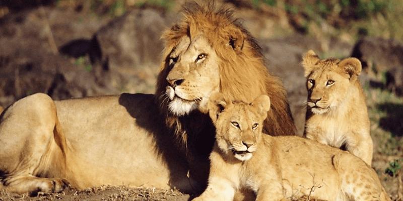 Vasona Lion Safari Park